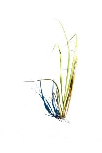 Grass Artful
