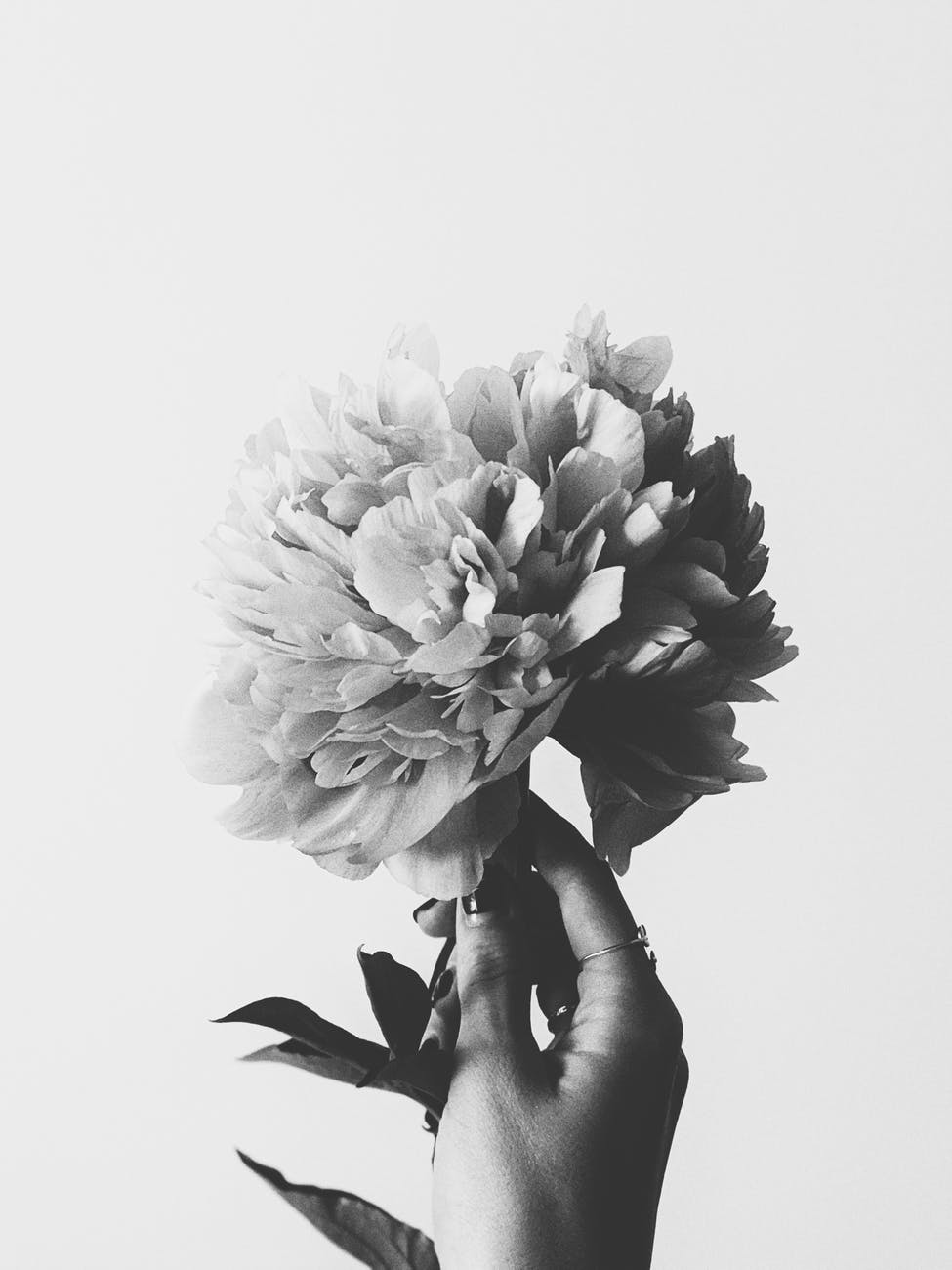 person holding a flower